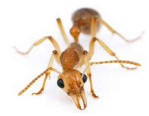 ants-insects-photo